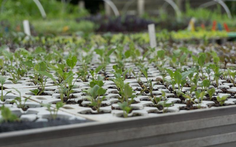 Pflanzenanzucht biologisch