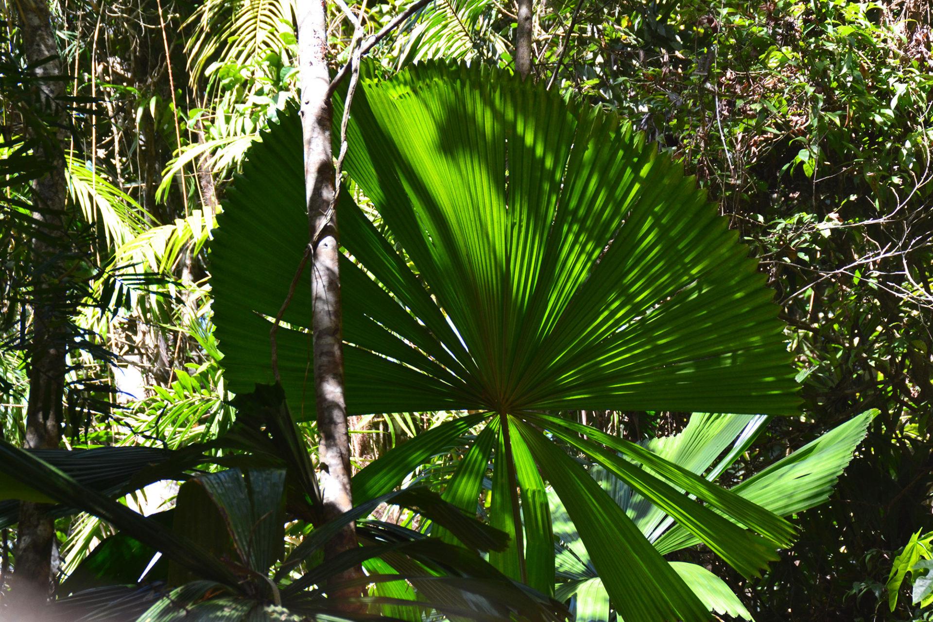 Palmöl Regenwaldzerstörung