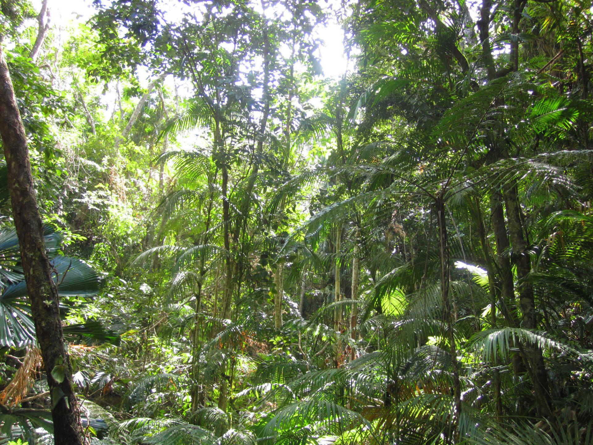 Palmöl Regenwald