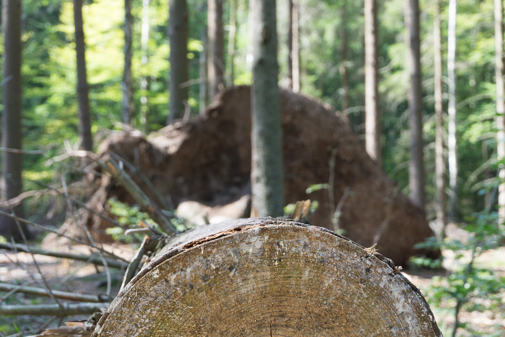 Baumaterial Holz Nachhaltigkeit