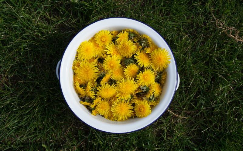 Wonig aus Blüten herstellen