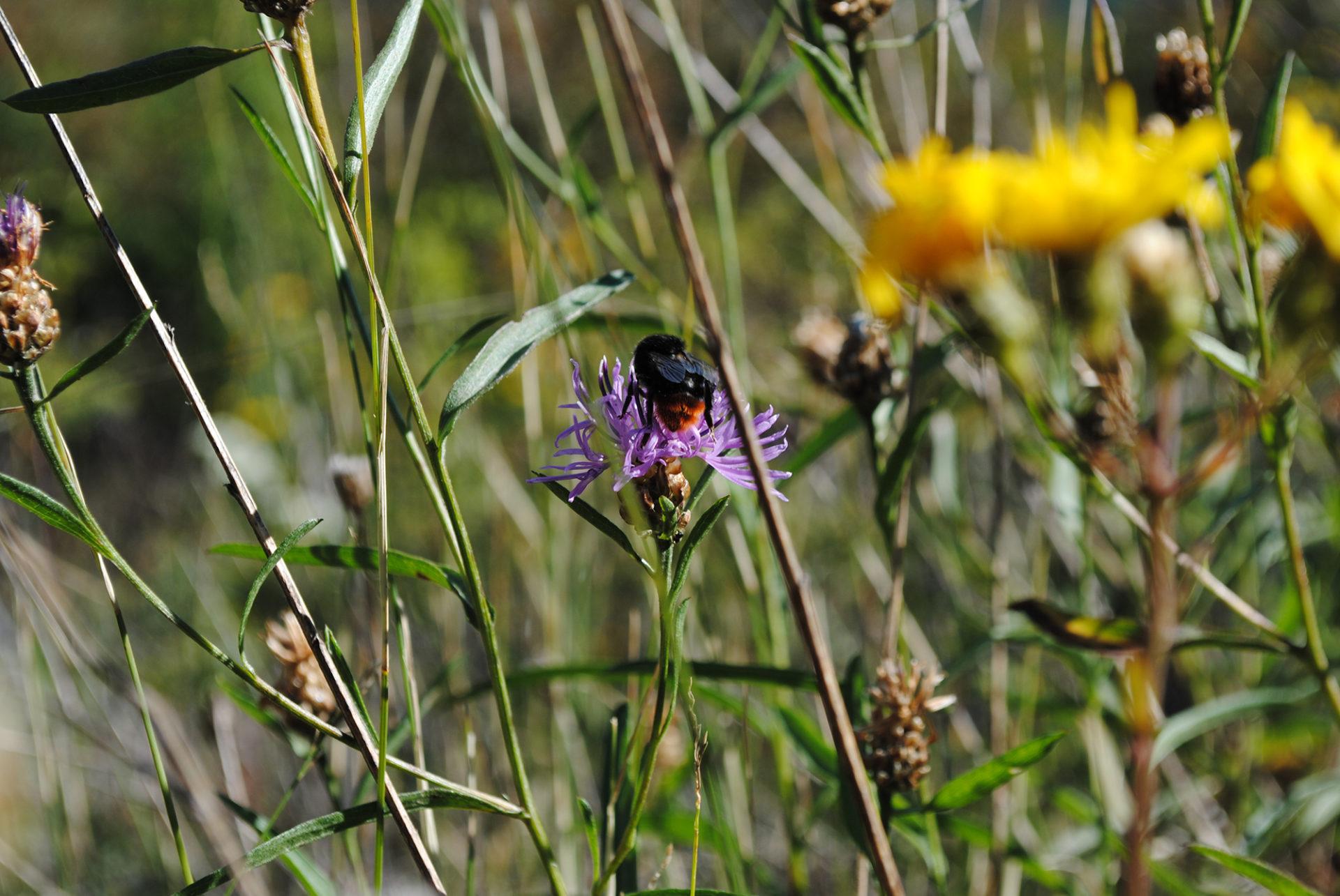 Bienen im Garten fördern