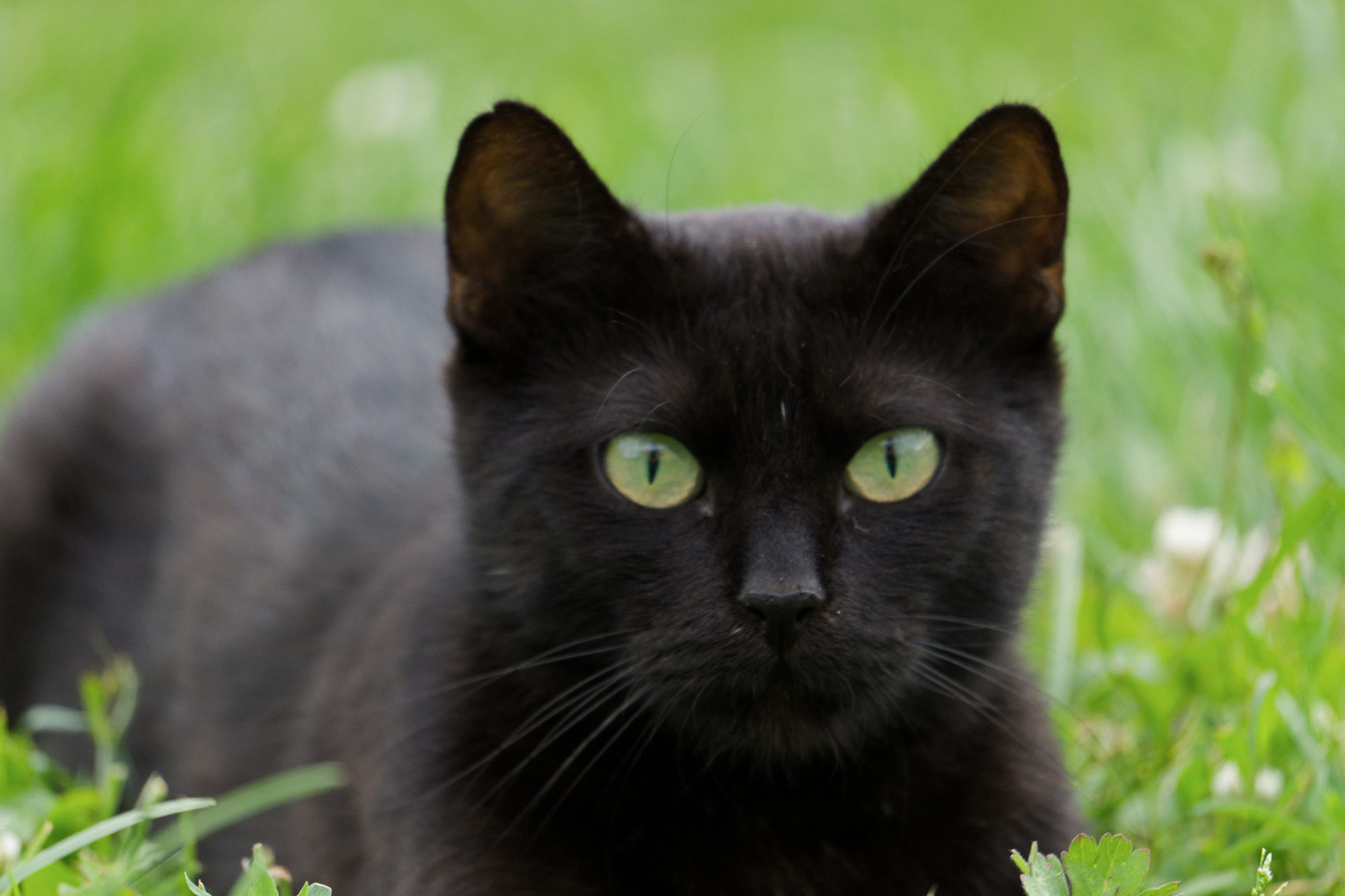 Katzenhaltung ökolgisch