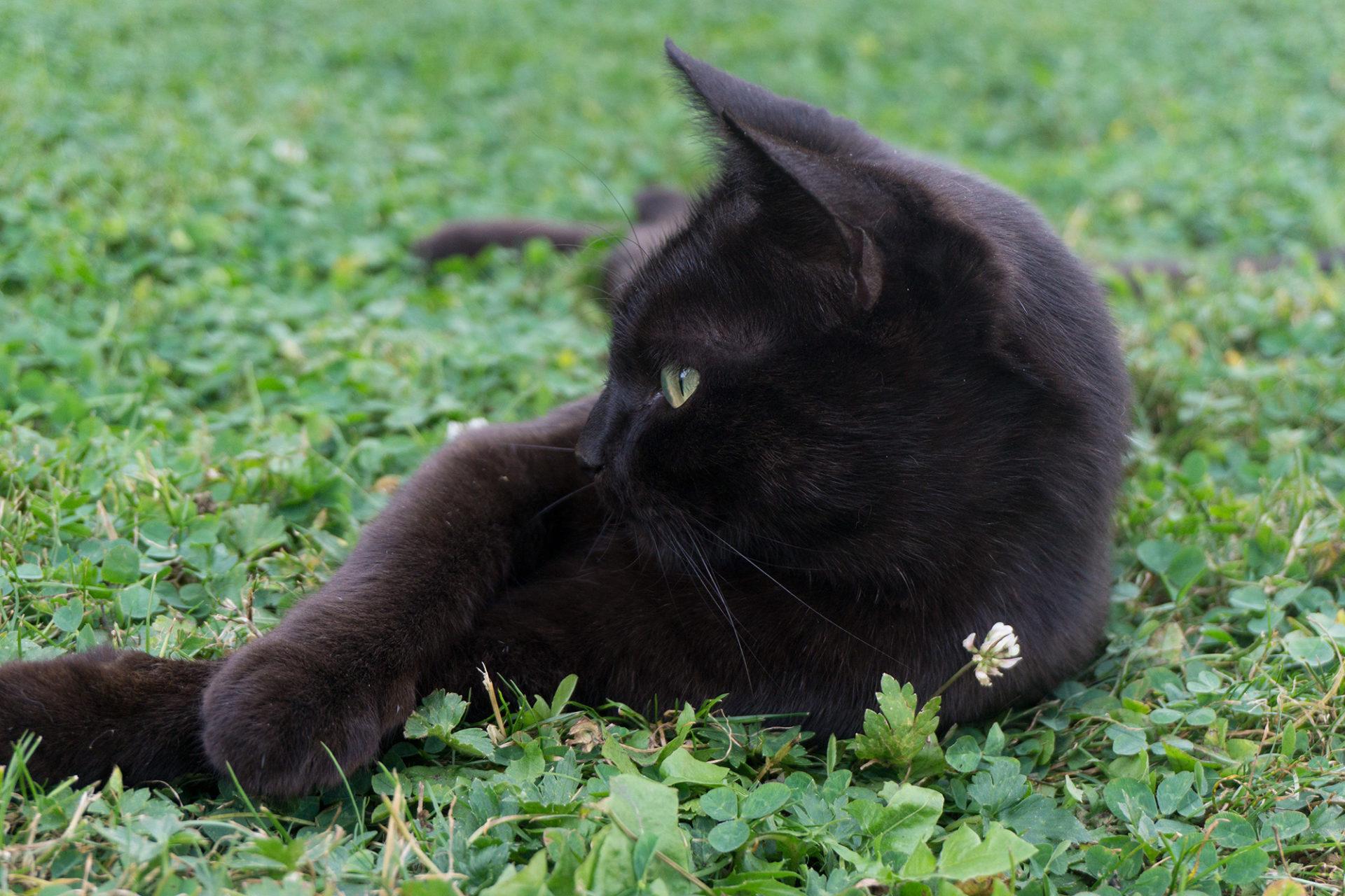 Katzenhaltung und Nachhaltigkeit
