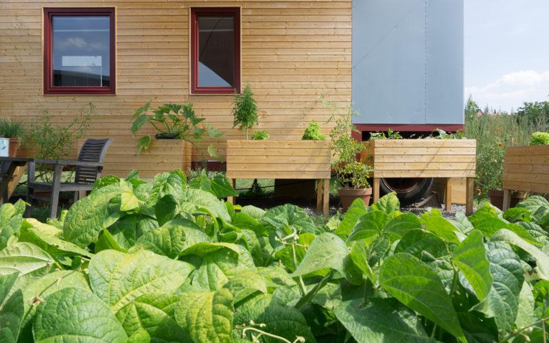 Tiny House Gemüsegarten