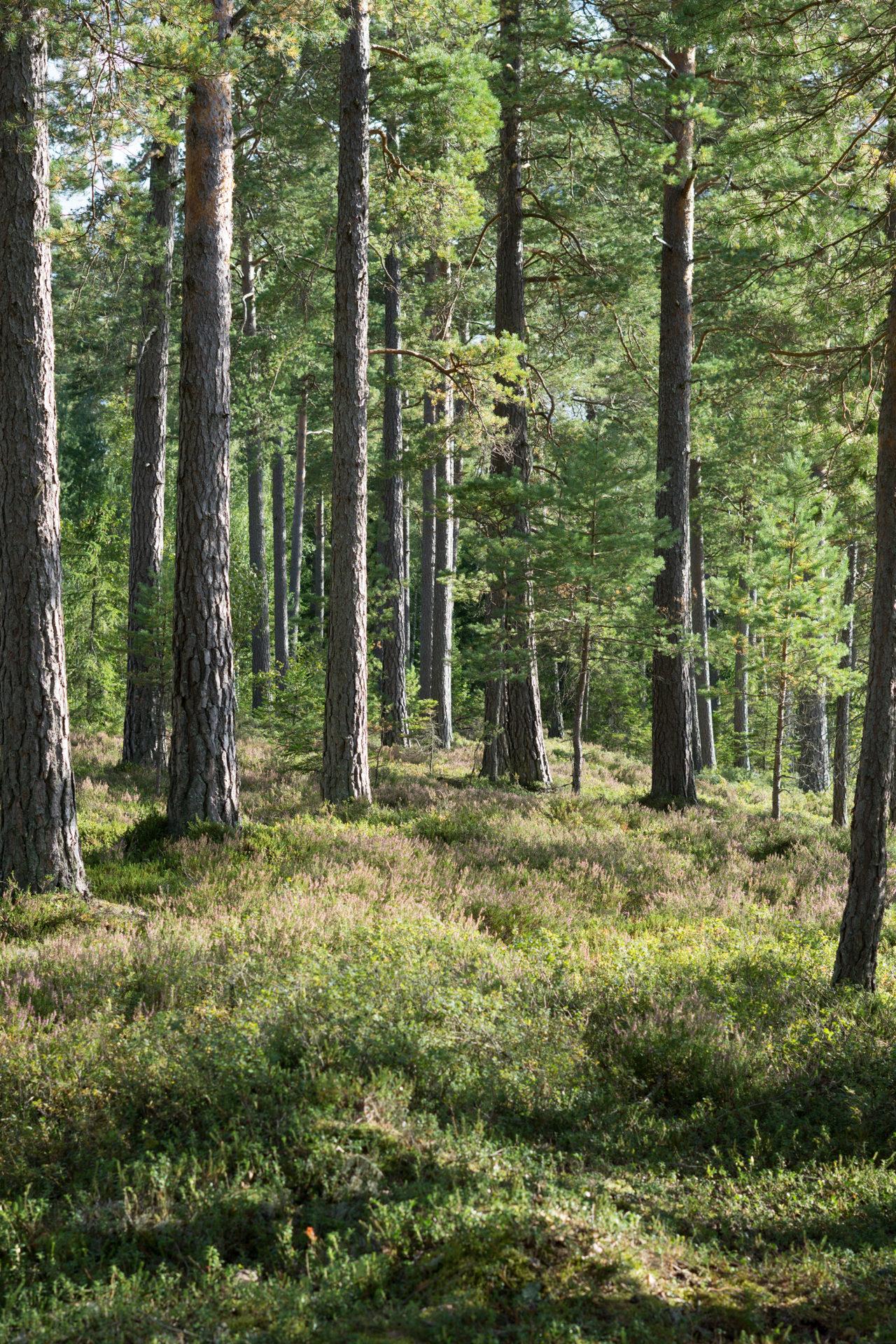 Der Wald und der Umweltschutz