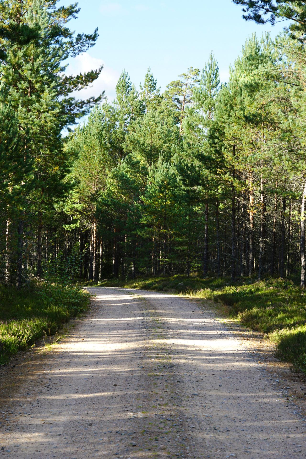 Der Wald und der Klimawandel