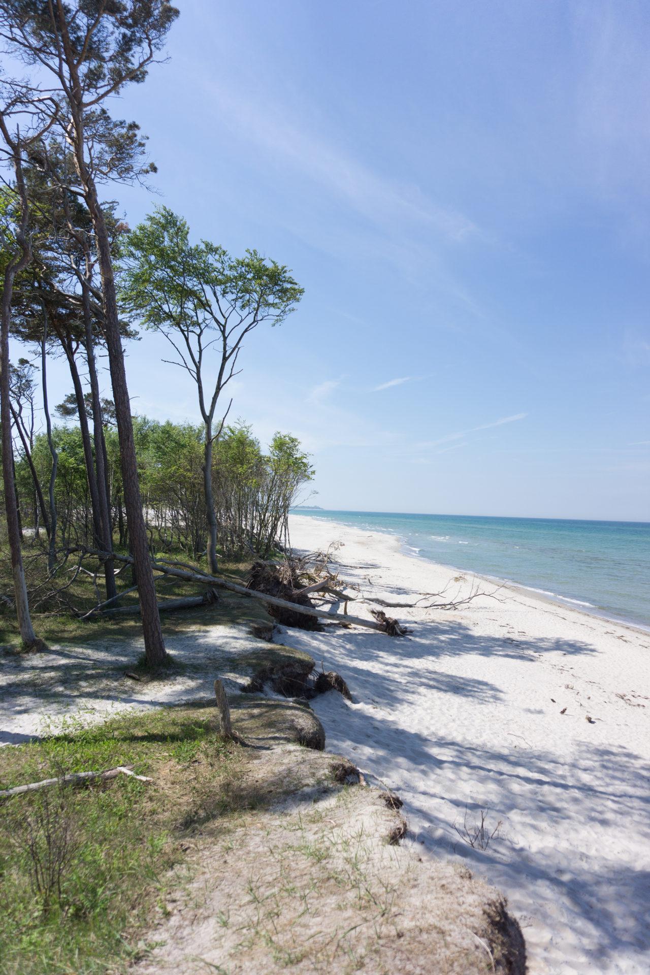 Wälder an der Küste im Klimwandel