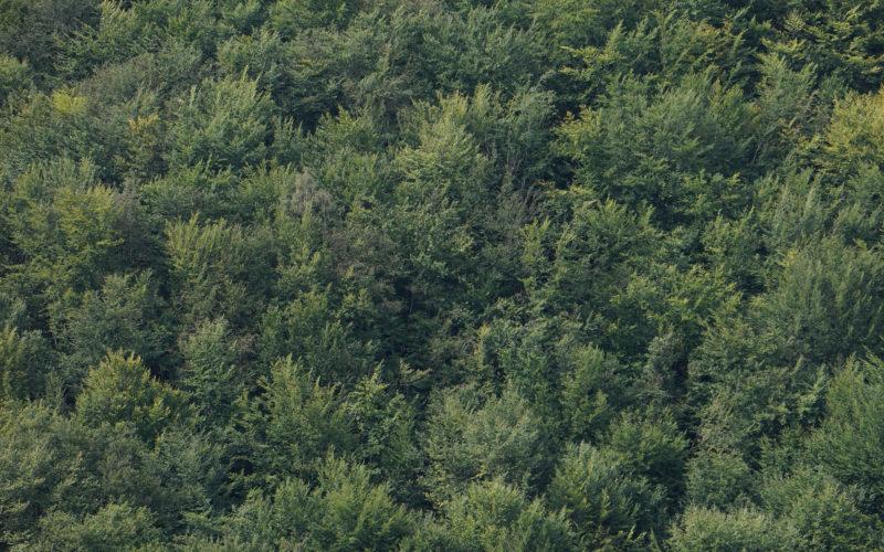 Die Zukunft des Waldes